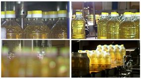 Producción de pantalla multi refinada del aceite de girasol almacen de video