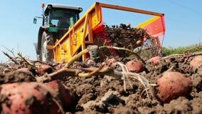 Producción de patatas en el campo