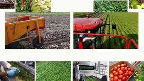 Producción de verduras - pantalla multi metrajes