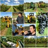 Producción de vino Imagen de archivo