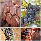 Producción de vino   Imágenes de archivo libres de regalías