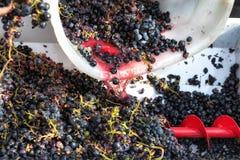 Producción de vino de Chianti en Toscana, Italia foto de archivo libre de regalías