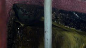 Producción del aceite de rabina, salida del aceite de rabina de la prensa al tanque de almacenamiento, primer Aceite de violación almacen de metraje de vídeo