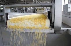 Producción del maíz Foto de archivo libre de regalías