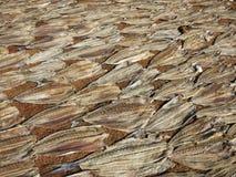Producción seca del mercado de pescados en Srii Lanka Foto de archivo libre de regalías