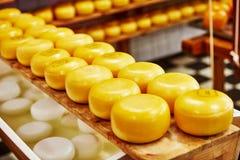 Producción de queso Foto de archivo libre de regalías