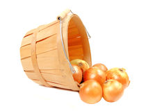 Produce. A group of onions flowing from a wooden harvest basket, on white Stock Image