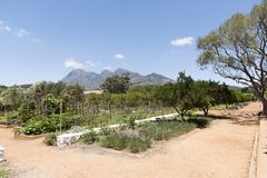 Produce being grown in a large garden. South Africa Royalty Free Stock Image