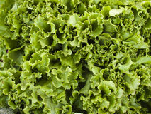 Produce - organic lettuce background Stock Photo