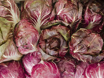 Produce - organisk raddichio royaltyfri foto