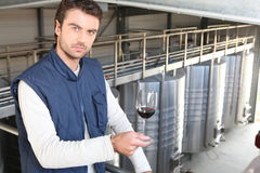 Producer in wine warehouse Stock Photo