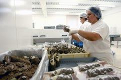 Producing chocolate Santas for Christmas stock photo