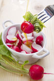 Product from the garden, fresh radish Stock Photos