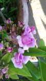 Producten van mijn tuin royalty-vrije stock foto
