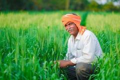 Producteur indien tenant la plante cultivée dans son domaine de blé image libre de droits