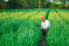 Producteur indien tenant la plante cultivée dans son domaine de blé photographie stock libre de droits