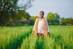 Producteur indien tenant la plante cultivée dans son domaine de blé images stock