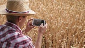 Producteur prenant des photos de rendement agricole de blé banque de vidéos