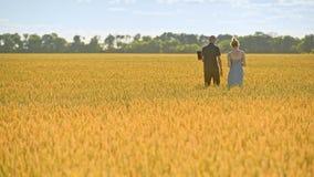 Producteurs marchant dans le domaine de blé Travailleurs agricoles dans le beau domaine jaune banque de vidéos
