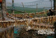 Productie van droge vissen Royalty-vrije Stock Foto
