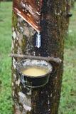 Productie van rubber van een rubberboom in Thailand, Azië royalty-vrije stock fotografie