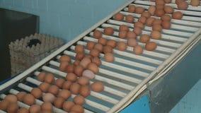 Productielijn bij kippenlandbouwbedrijf stock video