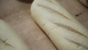 Production Of Bread. Bread bakery food factory production with fresh products stock video footage