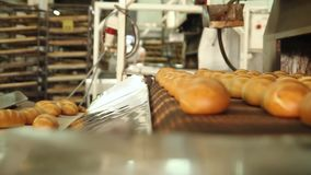 Freshly baked bread. Production of bread. Bread from the oven. Baking bread. Breads on the conveyor. Baked loaf of bread in the bakery, just out of the oven stock footage