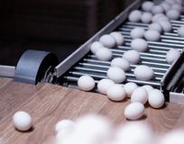The production of chicken eggs, poultry, chicken eggs go through the conveyor for further sorting, close-up, transporter, poultry. The production of chicken eggs royalty free stock photography