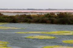 Production de sel près de Le Grau-du-ROI, Camargue, France Images stock