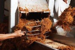 Production de tequila d'agave Photo libre de droits