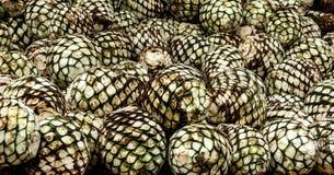 Production de tequila d'agave photographie stock libre de droits