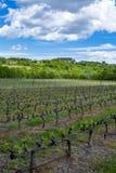 Production de vin rosé, rouge et blanc en Provence, au sud de la France, vignoble en début de l'été photo libre de droits