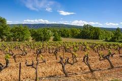 Production de vin ros?, rouge et blanc dans Luberon, Provence, au sud de la France, vignoble sur des ocres en d?but de l'?t? photos libres de droits