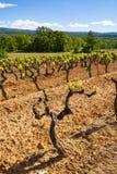 Production de vin ros?, rouge et blanc dans Luberon, Provence, au sud de la France, vignoble sur des ocres en d?but de l'?t? images libres de droits