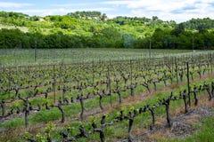 Production de vin ros?, rouge et blanc en Provence, au sud de la France, vignoble en d?but de l'?t? photo stock