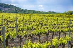 Production de vin ros?, rouge et blanc pr?s de petite ville Lacoste en Provence, au sud de la France, vignoble en d?but de l'?t? photo stock