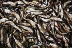 Production of dried fish Stock Photos