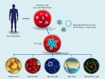 Production of iPSCs Royalty Free Stock Photography