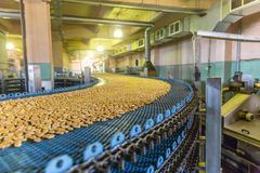 Production line of baking cookies. Biscuits on conveyor belt in confectionery factory, food industry.  stock photo