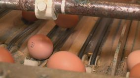 Production line at chicken farm stock video footage