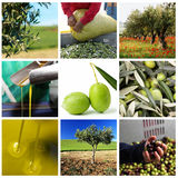 Production of olive oil Royalty Free Stock Photography