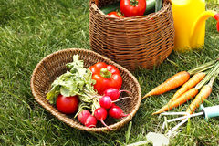 Production of organic vegetables Royalty Free Stock Images