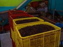 Production of processing tea leaves. Sri Lanka Stock Image