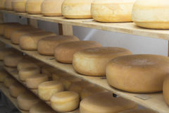 Production of smoked cheese Royalty Free Stock Images