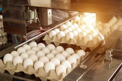 Production for sorting chicken eggs, the process of selection of chicken eggs, close-up, assortment, sun. Production for sorting chicken eggs, the process of stock photography