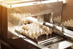 Production for sorting chicken eggs, the process of selection of chicken eggs, close-up, picking. Production for sorting chicken eggs, the process of selection stock photography