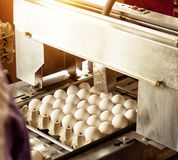 Production for sorting chicken eggs, the process of selection of chicken eggs, close-up, sorting. Production for sorting chicken eggs, the process of selection royalty free stock images