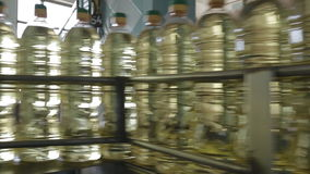 Production Of Sunflower Oil In A Factory stock video