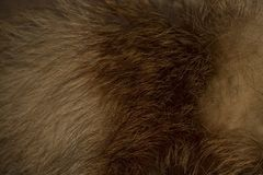 Producto de la piel del zorro rojo fotos de archivo